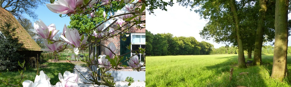 lentebloemen-bomenachter.jpg