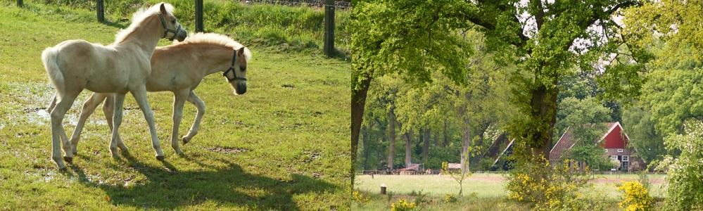 paardjes-boerderijver.jpg