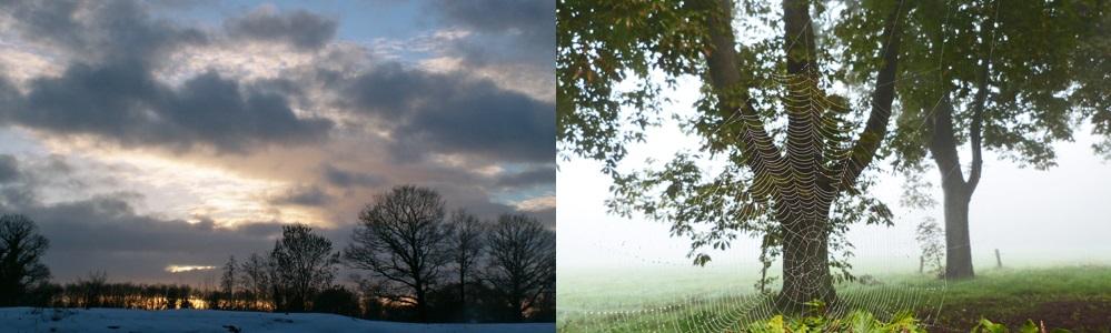 winterboom-spinneweb.jpg